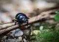 Ilustrasi serangga kumbang /pixabay